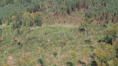Huragan zniszczył szczecińskie lasy