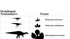 Ślady Ornitopodów znalezione w Broome (University of Queensland/Steve Salisbury)