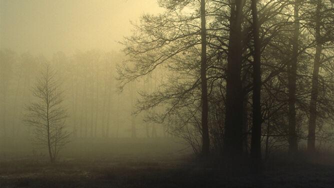 W kraju nadal mglisto. Widzialność ograniczona od 100 do 400 metrów